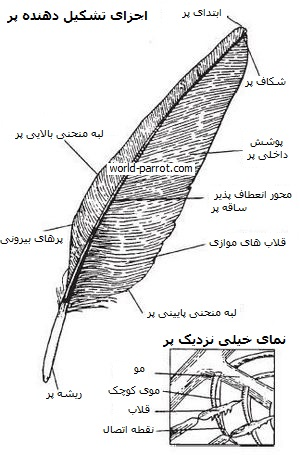 anatomy-information-Feather-image