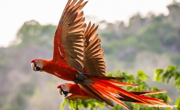 macaws-information