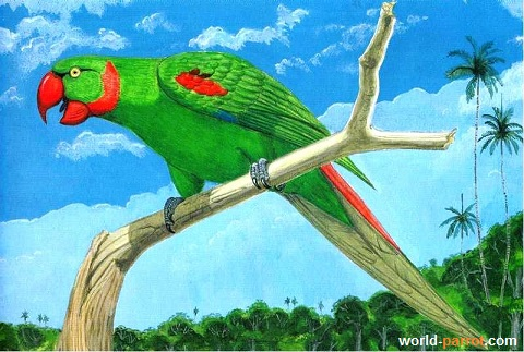 Extinct parrot