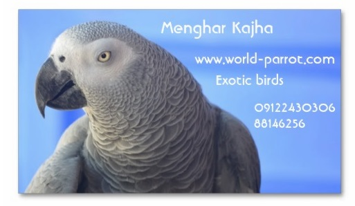 visit-card-exotic-birds